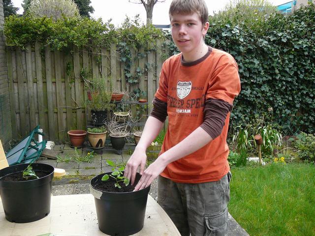 Doe het plantje in de pot en druk de grond erom heen goed aan. Dan bewateren.