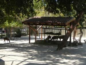 618 Jardim Zoológico
