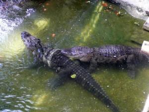 625 Jardim Zoológico