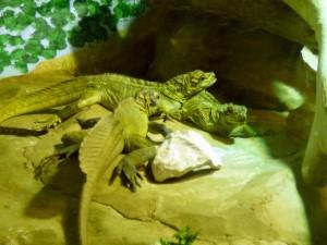 627 Jardim Zoológico