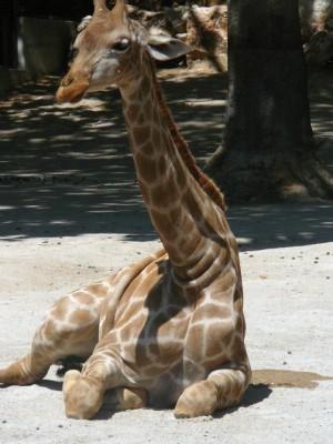 629 Jardim Zoológico