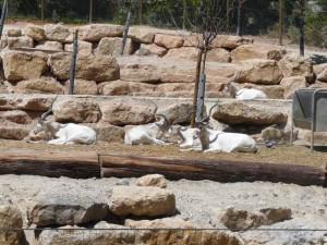 639 Jardim Zoológico