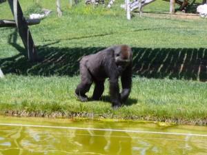 641 Jardim Zoológico