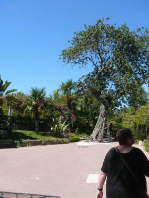 642 Jardim Zoológico