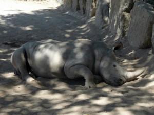 644 Jardim Zoológico