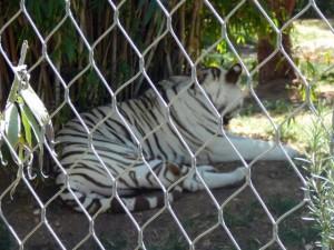 645 Jardim Zoológico