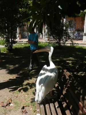 647 Jardim Zoológico