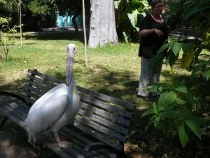 648 Jardim Zoológico