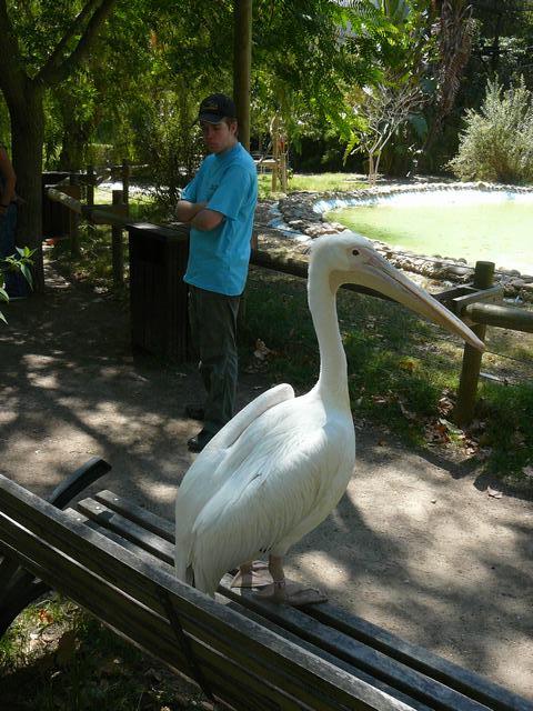 650 Jardim Zoológico