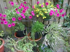 Kruidenhoekje - Herbs corner