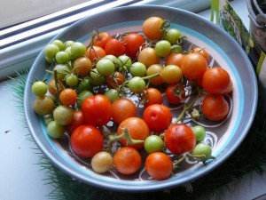 27 september 2009 - tomatenoogst