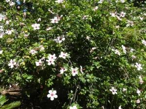432 Jardim Agricola Tropical