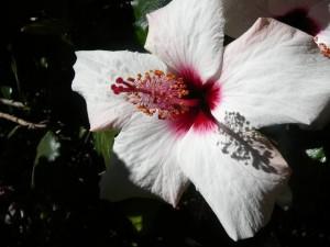 435 Jardim Agricola Tropical