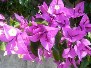 437 Jardim Agricola Tropical