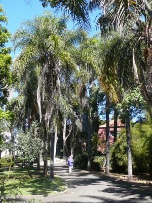443 Jardim Agricola Tropical