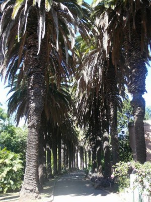 449 Jardim Agricola Tropical