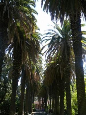 457 Jardim Agricola Tropical