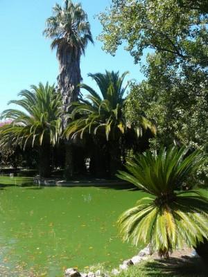 464 Jardim Agricola Tropical