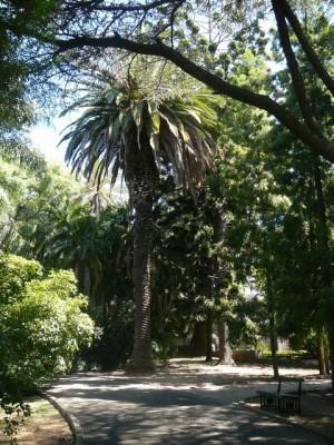 467 Jardim Agricola Tropical