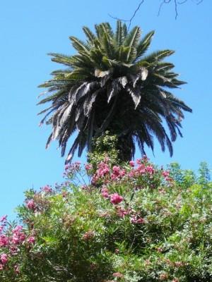 471 Jardim Agricola Tropical