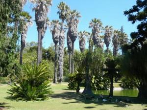477 Jardim Agricola Tropical
