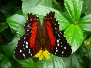 44 Hortus Botanicus - vlinderkas
