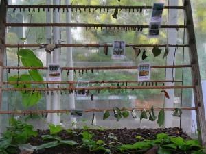 45 Hortus Botanicus - de poppenkast