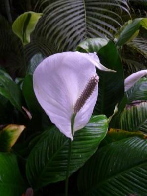 55 Hortus Botanicus