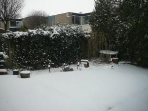 Achtertuin - Back yard