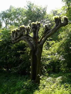 Malle boom in de buurt - Strange tree on our way home