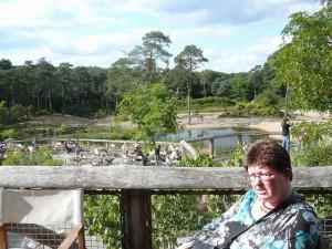 Uitzicht vanaf het Safari-restaurant