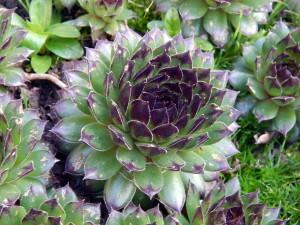 03 vetplant