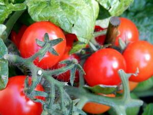 140502 03 tomaatjes