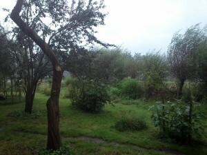 15 regen