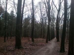 025 140223 Schaarsbergen