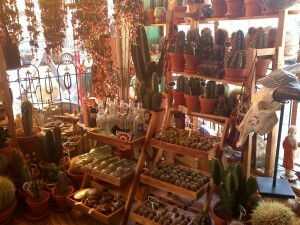 118 cactuswinkel