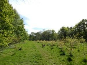 0793 Scholes Park