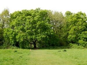 0799 Scholes Park