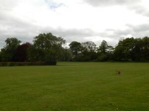 0997 Scholes Park