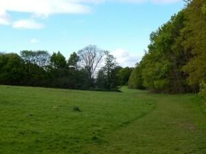 1009 Scholes Park