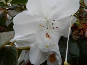 1277 Lyme Garden - Orangery