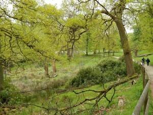 1302 Lyme Park