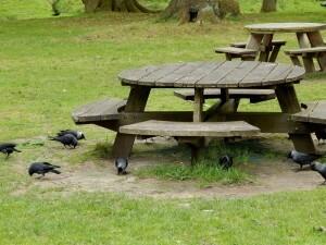 1311 picnick