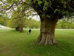 1346 Lyme Park