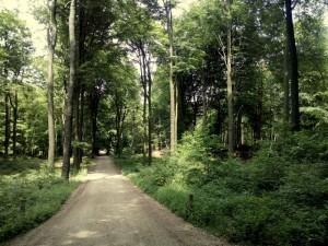 150529 061 Schaarsbergen Warnsborn