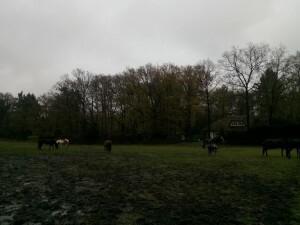 151201 291 Schaarsbergen
