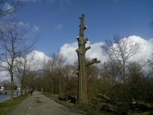 160327 296 boom gesloopt langs het kanaal