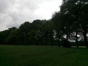 160531 311 Schaarsbergen - Warnsborn