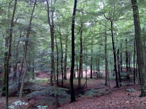 160531 317 Schaarsbergen - Warnsborn