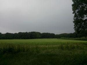 160615 426 Schaarsbergen Warnsborn